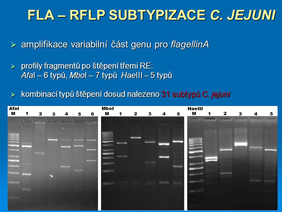 FLA – RFLP SUBTYPIZACE C. JEJUNI