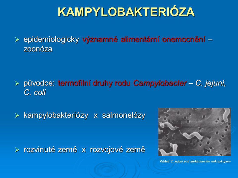 KAMPYLOBAKTERIÓZA epidemiologicky významné alimentární onemocnění – zoonóza. původce: termofilní druhy rodu Campylobacter – C. jejuni, C. coli.