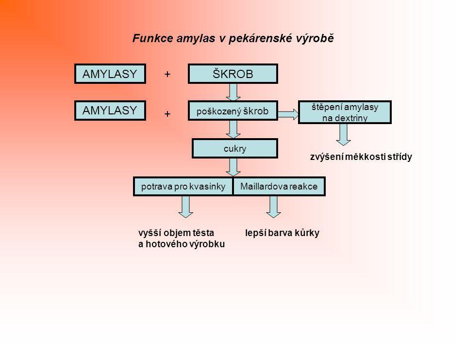 Funkce amylas v pekárenské výrobě