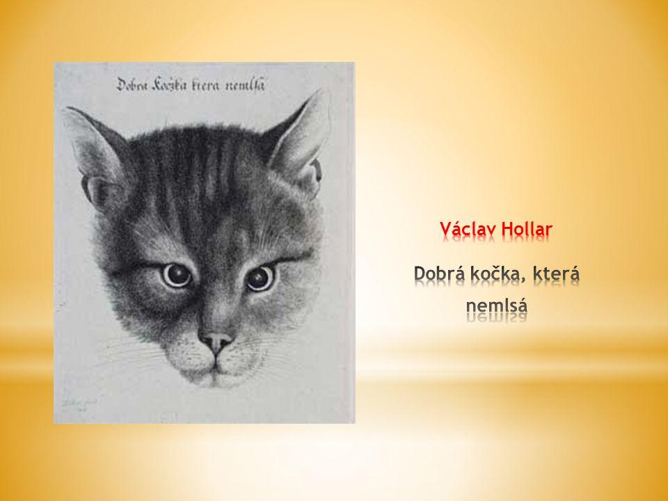 Václav Hollar Dobrá kočka, která nemlsá