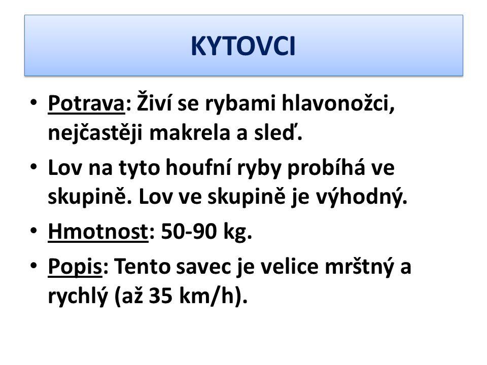 KYTOVCI Potrava: Živí se rybami hlavonožci, nejčastěji makrela a sleď.