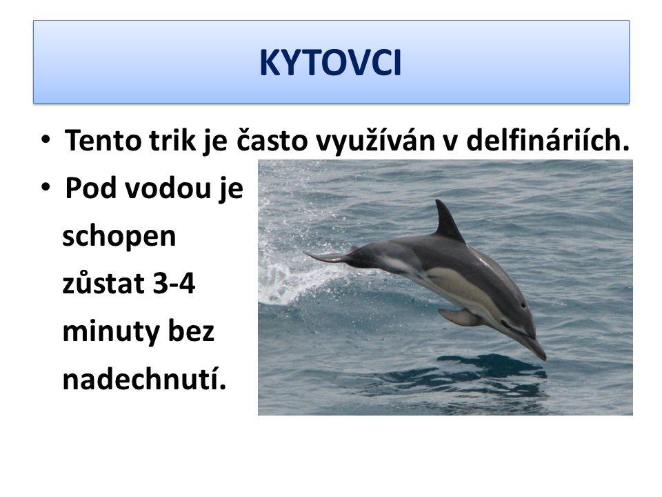 KYTOVCI Tento trik je často využíván v delfináriích. Pod vodou je