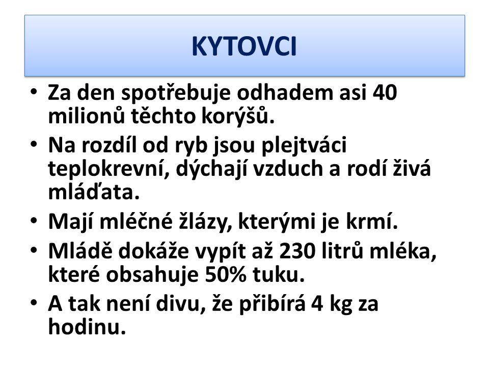 KYTOVCI Za den spotřebuje odhadem asi 40 milionů těchto korýšů.