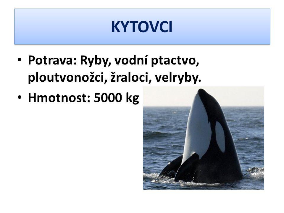 KYTOVCI Potrava: Ryby, vodní ptactvo, ploutvonožci, žraloci, velryby.