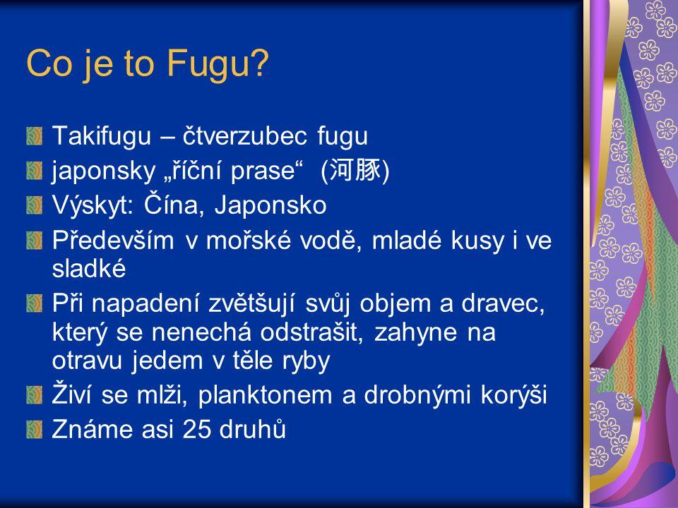 """Co je to Fugu Takifugu – čtverzubec fugu japonsky """"říční prase (河豚)"""