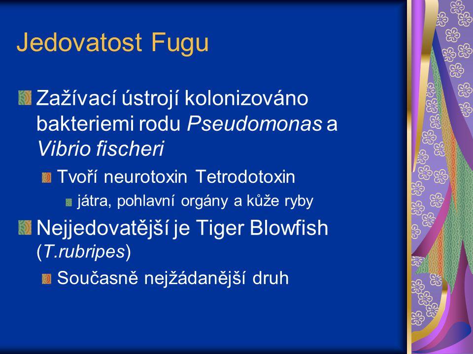 Jedovatost Fugu Zažívací ústrojí kolonizováno bakteriemi rodu Pseudomonas a Vibrio fischeri. Tvoří neurotoxin Tetrodotoxin.