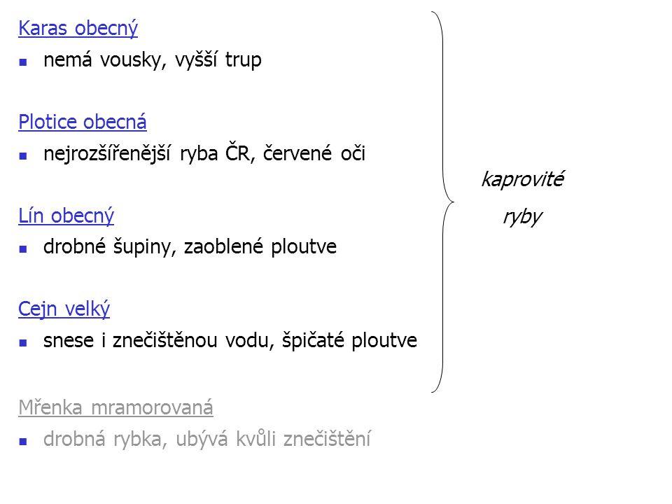 Karas obecný nemá vousky, vyšší trup. Plotice obecná. nejrozšířenější ryba ČR, červené oči. Lín obecný.