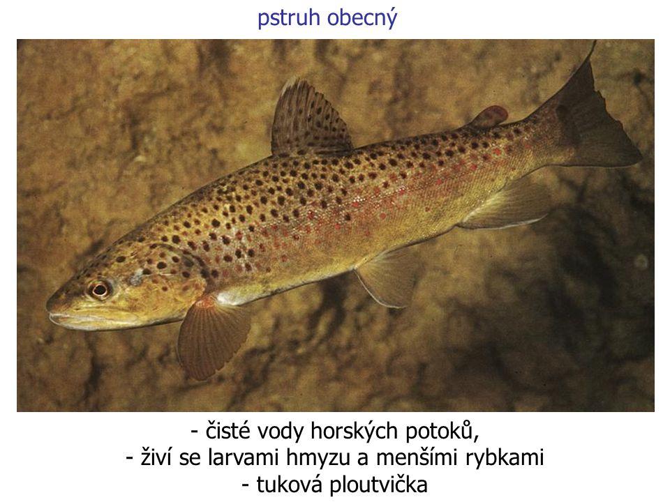 - čisté vody horských potoků, živí se larvami hmyzu a menšími rybkami