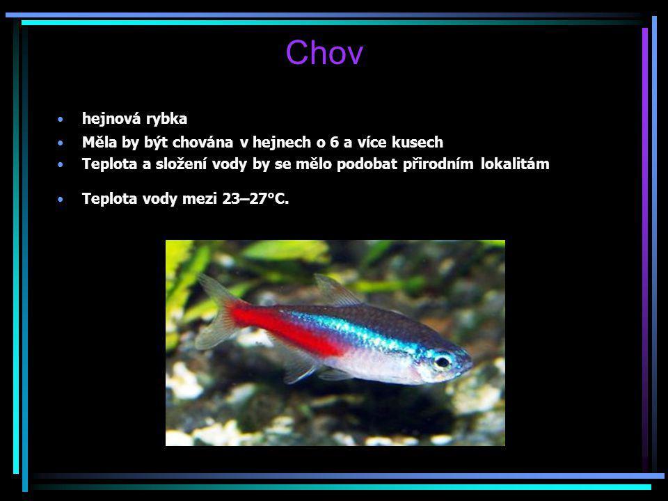 Chov hejnová rybka Měla by být chována v hejnech o 6 a více kusech