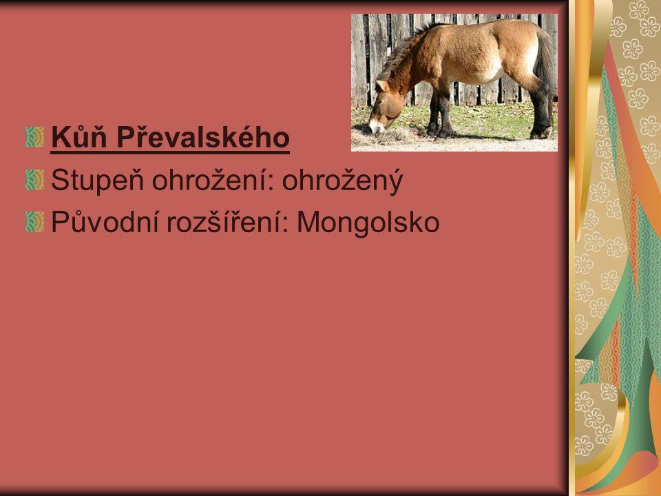 Kůň Převalského Stupeň ohrožení: ohrožený Původní rozšíření: Mongolsko