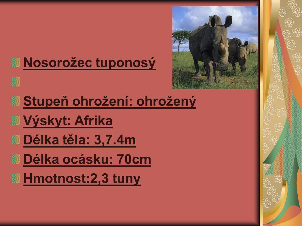 Nosorožec tuponosý Stupeň ohrožení: ohrožený. Výskyt: Afrika. Délka těla: 3,7.4m. Délka ocásku: 70cm.
