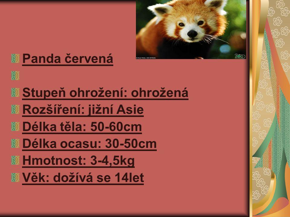 Panda červená Stupeň ohrožení: ohrožená. Rozšíření: jižní Asie. Délka těla: 50-60cm. Délka ocasu: 30-50cm.