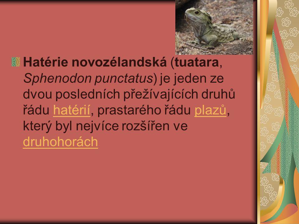 Hatérie novozélandská (tuatara, Sphenodon punctatus) je jeden ze dvou posledních přežívajících druhů řádu hatérií, prastarého řádu plazů, který byl nejvíce rozšířen ve druhohorách