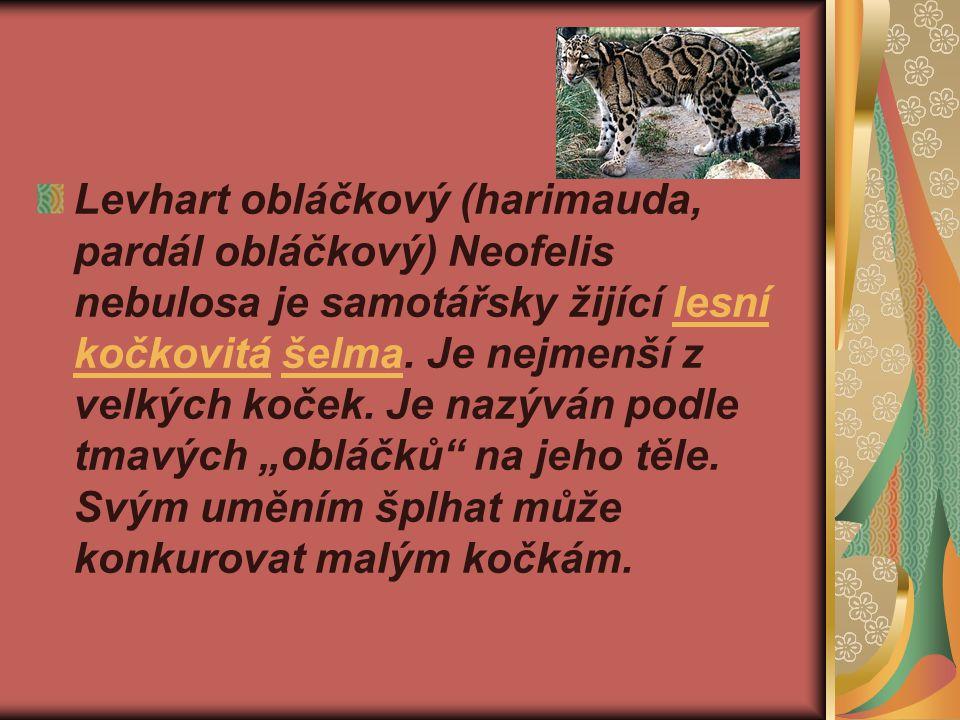 Levhart obláčkový (harimauda, pardál obláčkový) Neofelis nebulosa je samotářsky žijící lesní kočkovitá šelma.