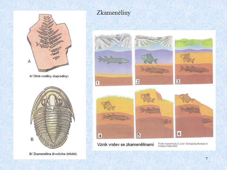 Zkameněliny