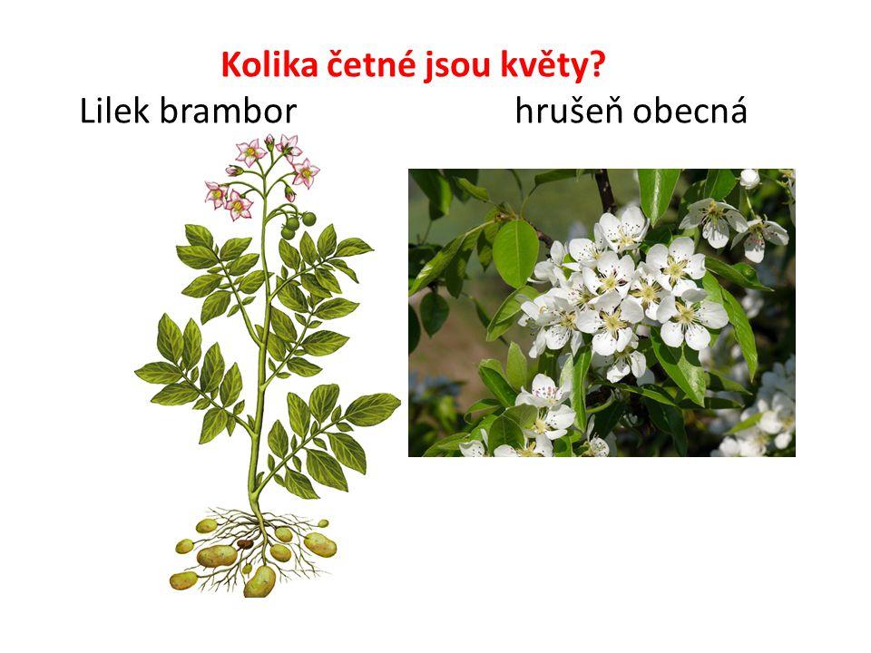 Kolika četné jsou květy Lilek brambor hrušeň obecná
