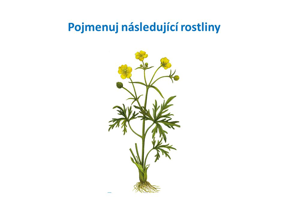 Pojmenuj následující rostliny