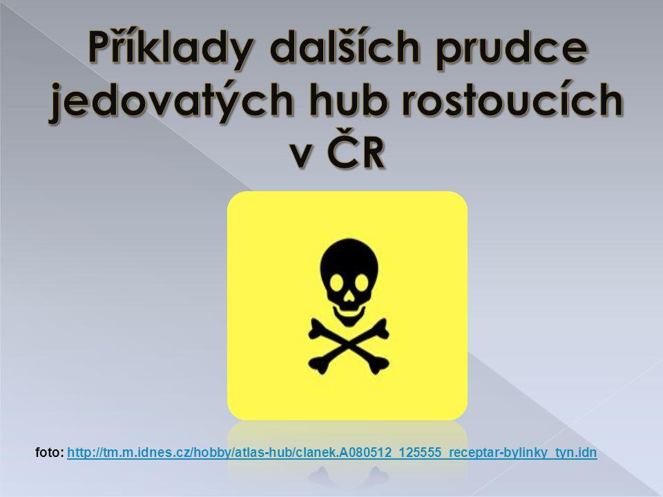 Příklady dalších prudce jedovatých hub rostoucích v ČR