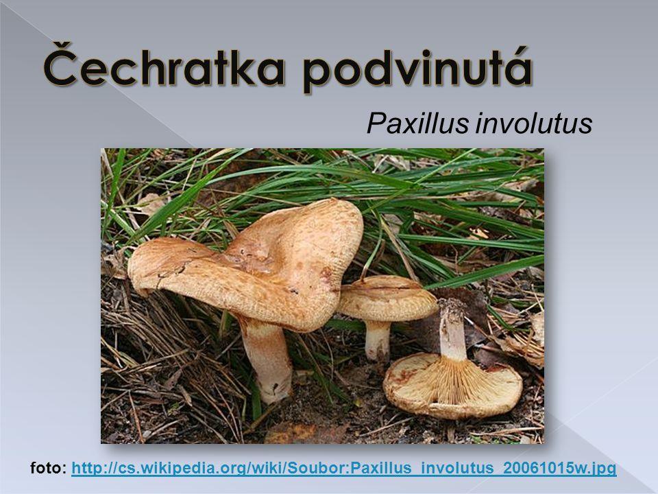 Čechratka podvinutá Paxillus involutus