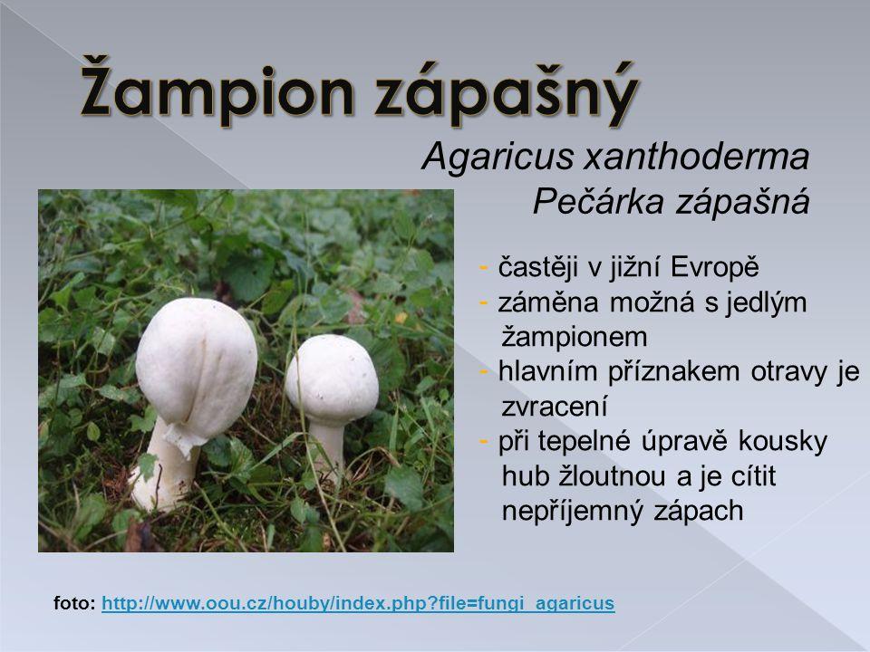 Žampion zápašný Agaricus xanthoderma Pečárka zápašná