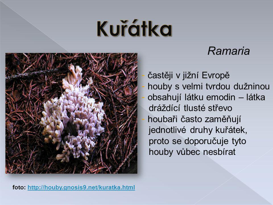Kuřátka Ramaria častěji v jižní Evropě houby s velmi tvrdou dužninou