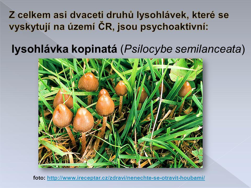 lysohlávka kopinatá (Psilocybe semilanceata)