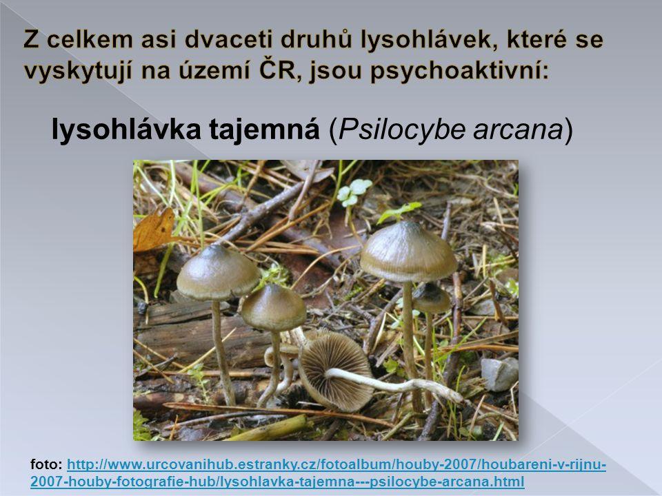 lysohlávka tajemná (Psilocybe arcana)