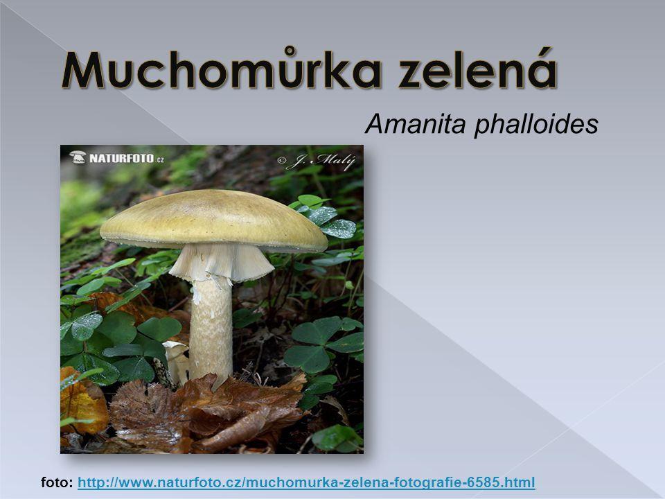 Muchomůrka zelená Amanita phalloides