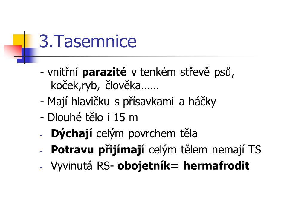 3.Tasemnice - vnitřní parazité v tenkém střevě psů, koček,ryb, člověka…… - Mají hlavičku s přísavkami a háčky.