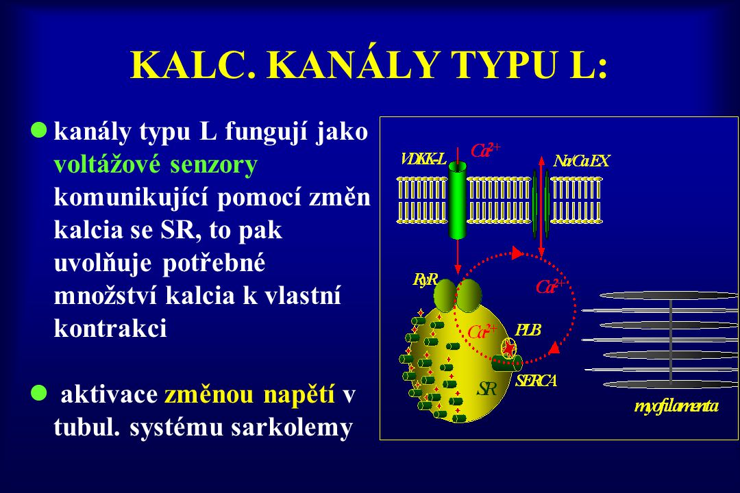 KALC. KANÁLY TYPU L: kanály typu L fungují jako voltážové senzory