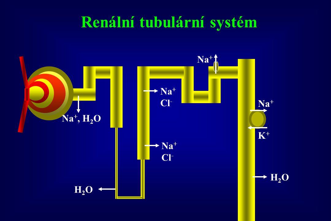 Renální tubulární systém