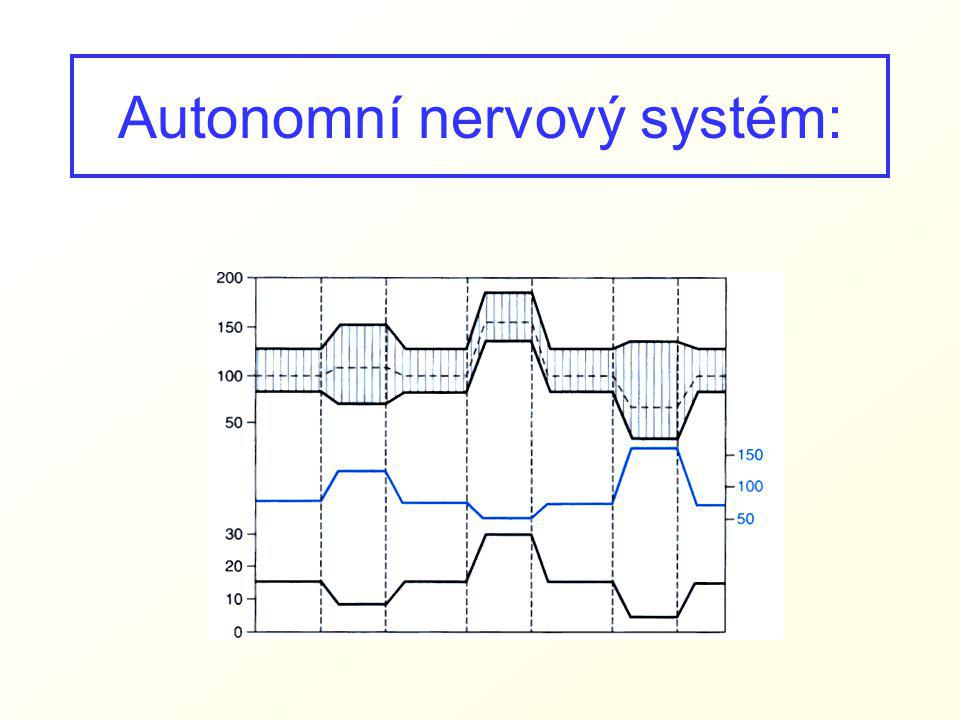 Autonomní nervový systém: