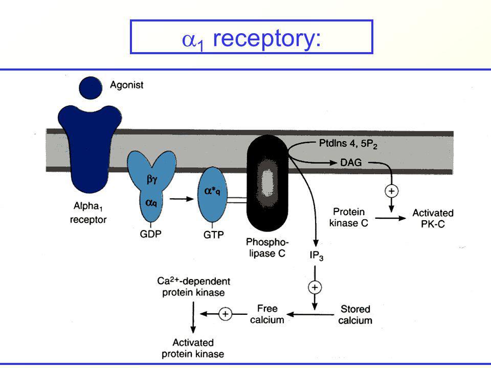 1 receptory: