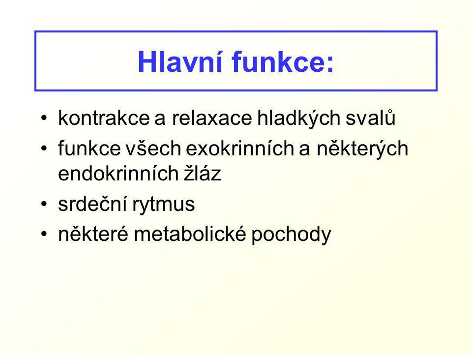 Hlavní funkce: kontrakce a relaxace hladkých svalů