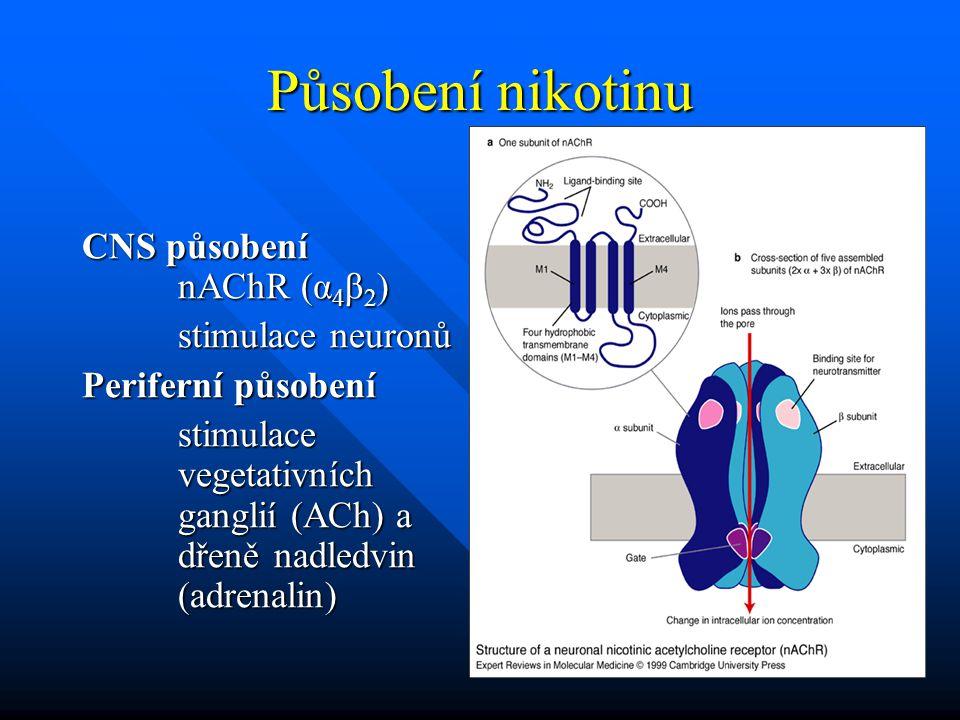 Působení nikotinu CNS působení nAChR (α4β2) stimulace neuronů