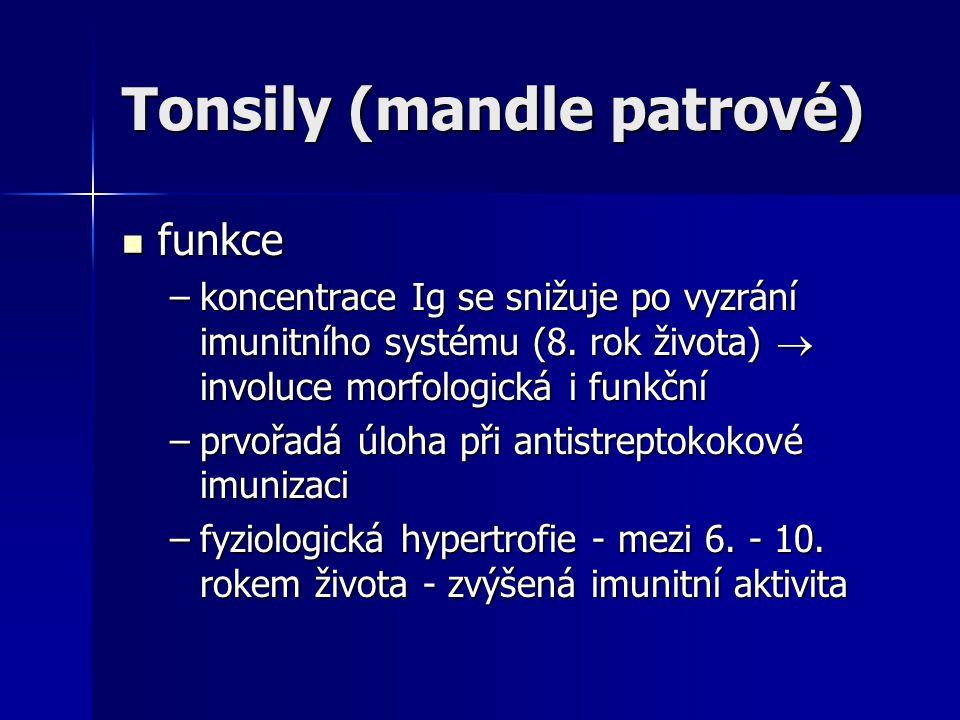 Tonsily (mandle patrové)