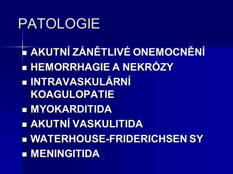 PATOLOGIE AKUTNÍ ZÁNĚTLIVÉ ONEMOCNĚNÍ HEMORRHAGIE A NEKRÓZY