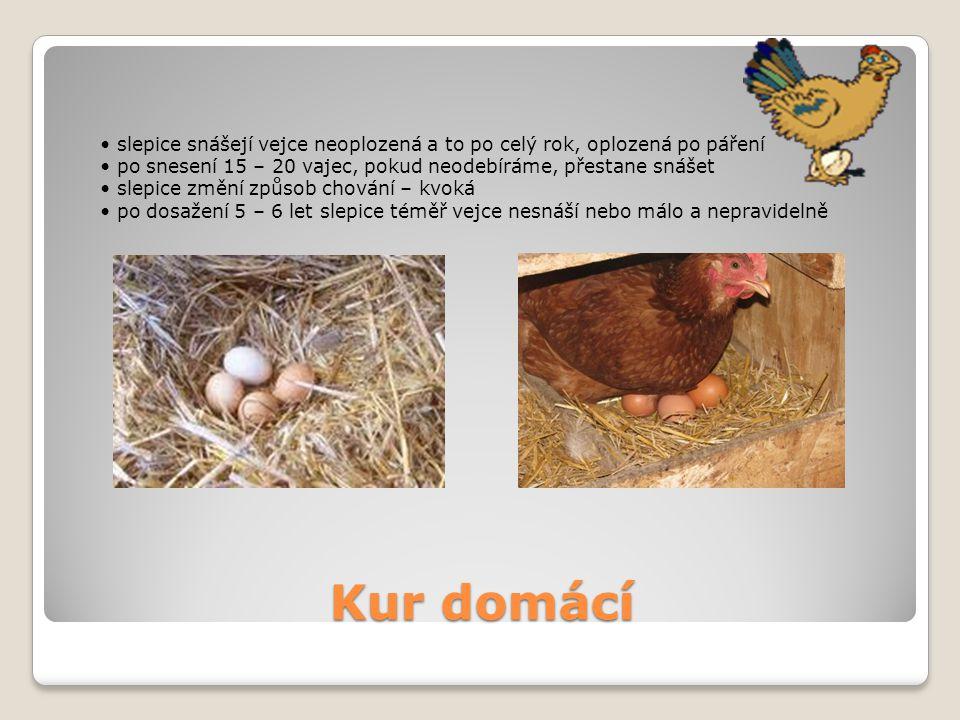 • slepice snášejí vejce neoplozená a to po celý rok, oplozená po páření