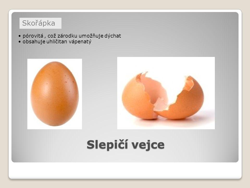 Slepičí vejce Skořápka • pórovitá , což zárodku umožňuje dýchat
