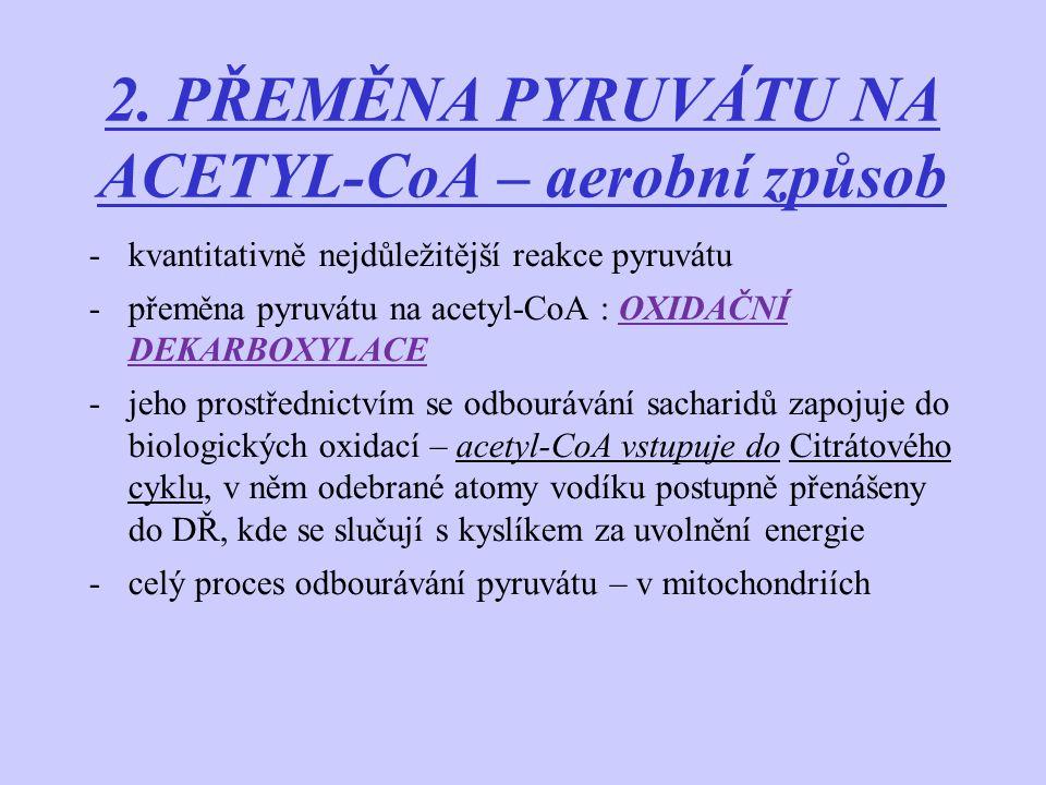 2. PŘEMĚNA PYRUVÁTU NA ACETYL-CoA – aerobní způsob