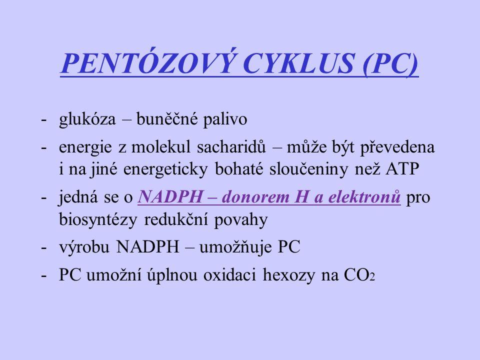 PENTÓZOVÝ CYKLUS (PC) glukóza – buněčné palivo