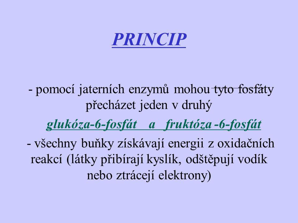PRINCIP - pomocí jaterních enzymů mohou tyto fosfáty přecházet jeden v druhý. glukóza-6-fosfát a fruktóza -6-fosfát.
