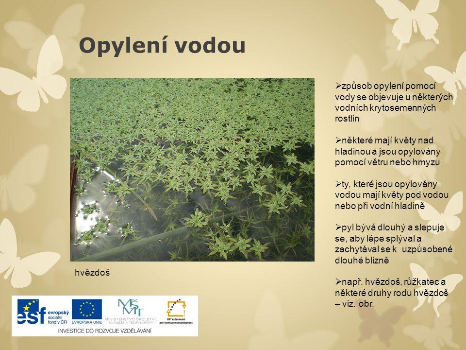 Opylení vodou způsob opylení pomocí vody se objevuje u některých vodních krytosemenných rostlin.