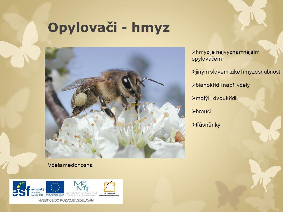 Opylovači - hmyz hmyz je nejvýznamnějším opylovačem