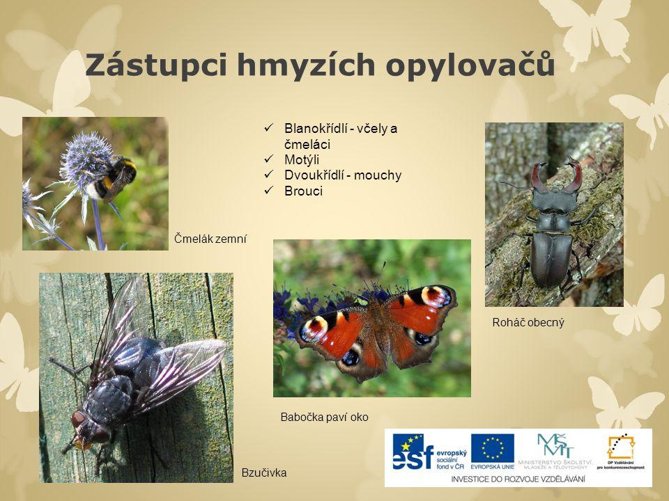 Zástupci hmyzích opylovačů