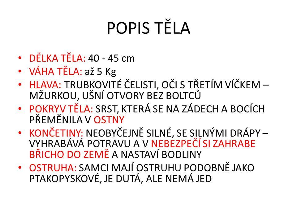 POPIS TĚLA DÉLKA TĚLA: 40 - 45 cm VÁHA TĚLA: až 5 Kg