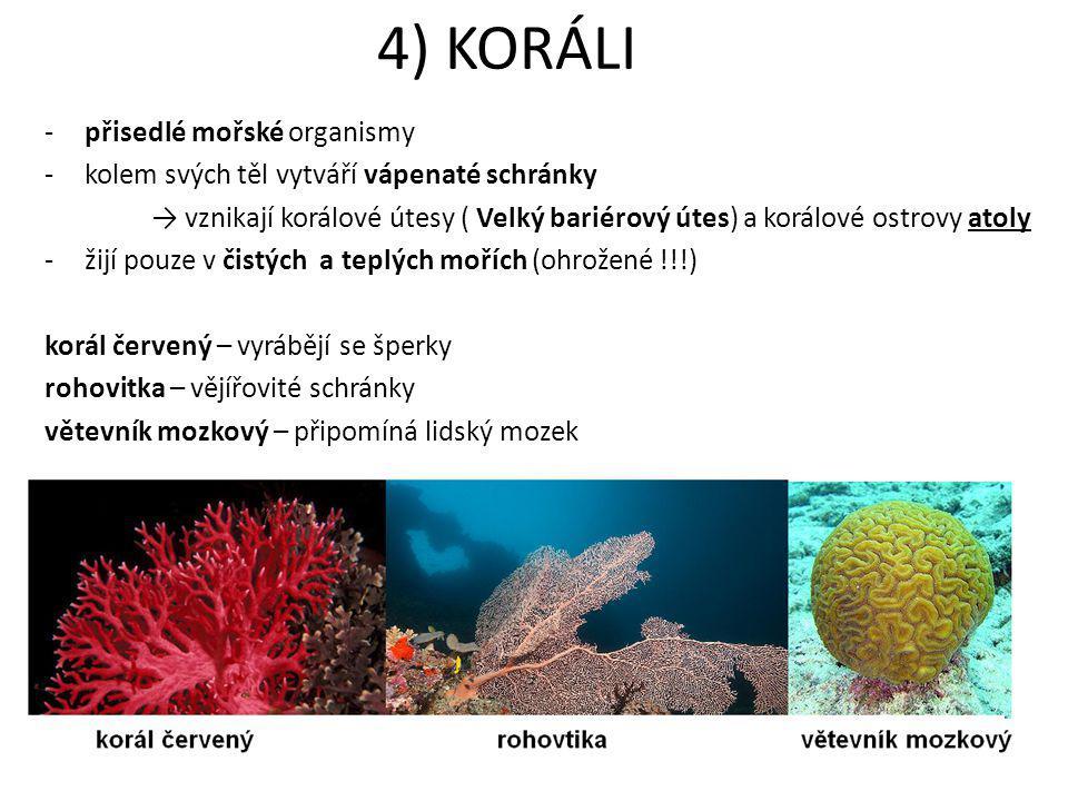 4) KORÁLI přisedlé mořské organismy