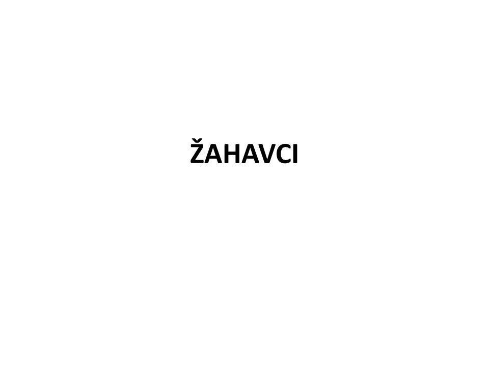 ŽAHAVCI
