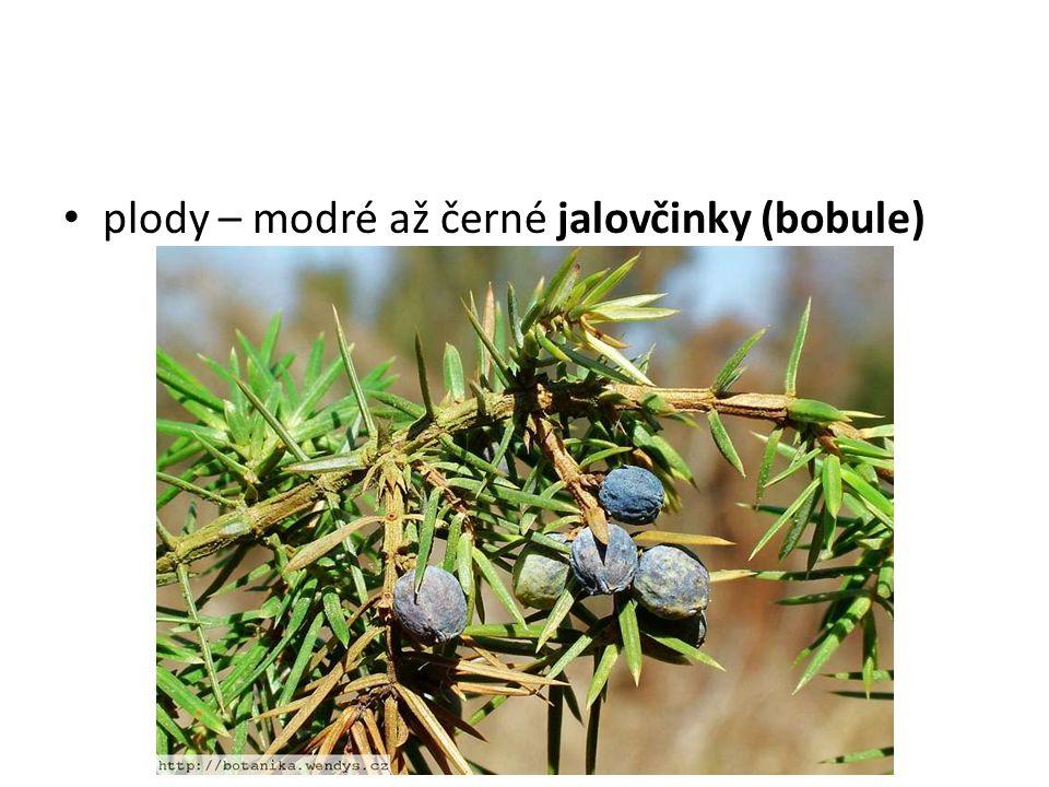 plody – modré až černé jalovčinky (bobule)