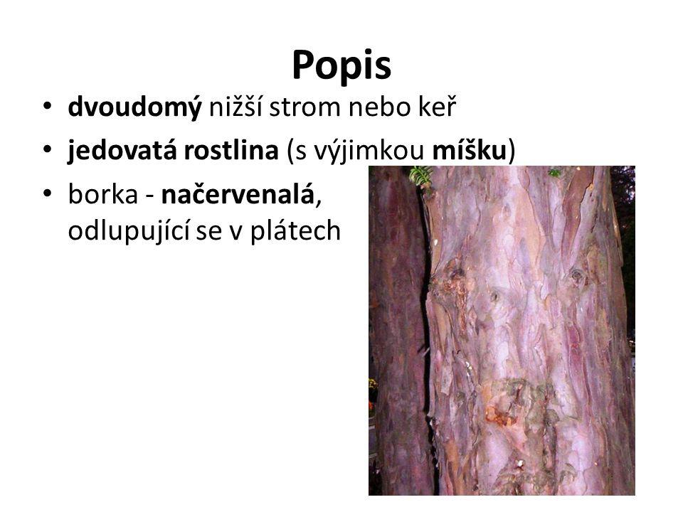 Popis dvoudomý nižší strom nebo keř